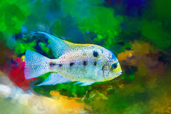 Bright colored tropical fish on algae background. Watercolor, stylized Stock Photos