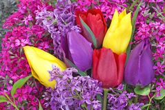 Bright Colored Tulips and Spring Flowers royalty free stock photography