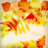 Bright colorful autumn leaves vector Stock Images