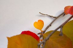 Bright colorful autumn twigs with a little leaf in the form of a heart. royalty free stock photo