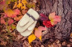 Bright colorful autumn in the woods. Knitted woolen women's mittens a bunch of ripe viburnum on a background bright autumn forest Stock Images