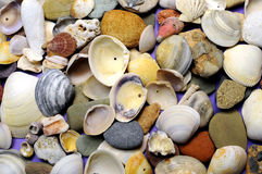 Bright and colorful beach shells and pebbles background Stock Photos