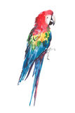 Bright colorful beautiful lovely sophisticated jungle tropical red and blue big tropical parrots diagonal pattern. Watercolor hand illustration vector illustration
