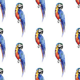 Bright colorful beautiful lovely sophisticated jungle tropical yellow, green, red and blue big tropical parrots diagonal pattern  Stock Image