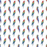 Bright colorful beautiful lovely sophisticated jungle tropical yellow, green, red and blue big tropical parrots diagonal pattern  Royalty Free Stock Photo