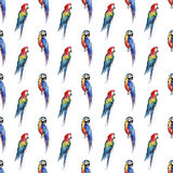 Bright colorful beautiful lovely sophisticated jungle tropical yellow, green, red and blue big tropical parrots diagonal pattern w Royalty Free Stock Images