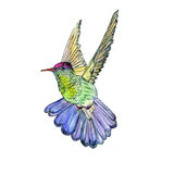 Bright colorful bird hummingbird Royalty Free Stock Photo