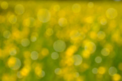 Bright colorful bokeh background Royalty Free Stock Image