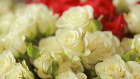 Bright colorful bouquet of red and white roses, close-up stock video footage