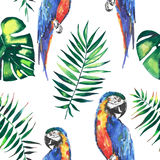 Bright colorful cute beautiful jungle tropical yellow and blue big parrots with green palm leaves pattern watercolor hand illustra Royalty Free Stock Photo