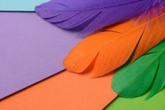 Bright colorful feather Stock Photos