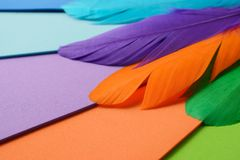 Bright colorful feather Stock Image