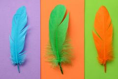 Bright colorful feather Royalty Free Stock Images