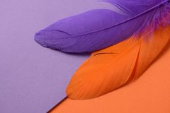 Bright colorful feather Stock Images