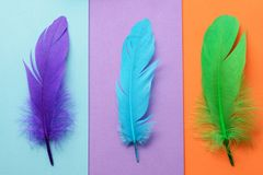 Bright colorful feather Stock Photo