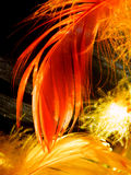 Bright colorful feathers. Color detail photography of bright feathers on black background stock photos