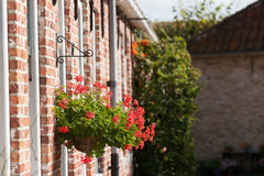Bright colorful flower basket on old historical house facades. Royalty Free Stock Photo