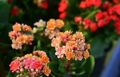 Bright colorful flowers. Royalty Free Stock Photos
