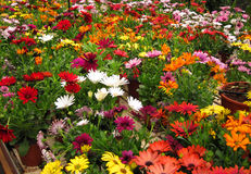 Bright colorful flowers. Stock Images