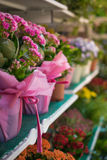 bright colorful flowers on the shelves Royalty Free Stock Image