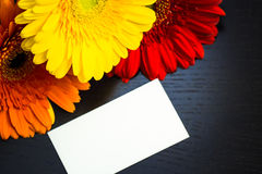 Bright colorful gerbera flowers and blank paper card Royalty Free Stock Photo