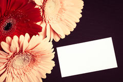 Bright colorful gerbera flowers and blank paper card Stock Images