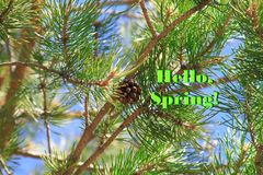 Bright colorful image of a spring pine tree with green needles and a brown open cone with the inscription Hello, spring.  Stock Image