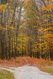 Bright and colorful landscape of sunny autumn forest with orange foliage and trail that branching.  royalty free stock photography