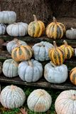 Bright and colorful large pumpkins and bales of hay at outdoor section of nursery stock photo