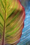 Bright colorful leaf. Creative nature. Bright colorful leaf background. Close-up Stock Images
