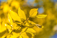 Bright colorful leaves on branches used as background Royalty Free Stock Photography