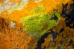 Bright Colorful Lichen Stock Photo