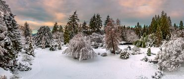 Bright, colorful night winter landscape Royalty Free Stock Photo