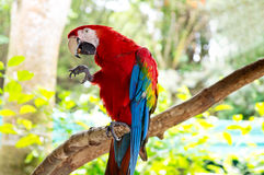 Bright, colorful parrot Royalty Free Stock Photos