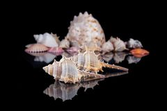 Bright colorful sea shells grouped across a dark background.  Stock Photos