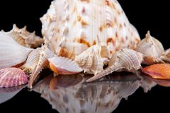Bright colorful sea shells grouped across a dark background Stock Photo
