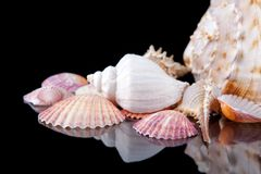 Bright colorful sea shells grouped across a dark background.  Stock Photography
