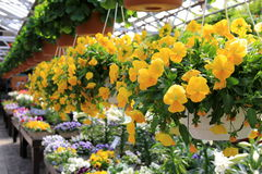 Bright and colorful seasonal flowers and flats Stock Image