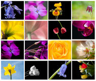Bright colorful Spring flower storyboard collage. Lovely collage showing numerous different Sping fresh flowers in glorious color Stock Photo