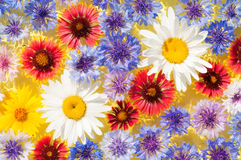 Bright, colorful spring flowers floating Stock Images