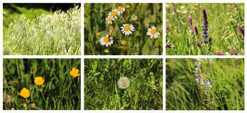 Bright colorful Spring plants storyboard collage Stock Images