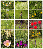 Bright colorful Spring plants storyboard collage Stock Photos