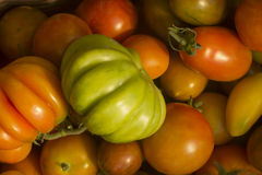 Bright colorful tomatoes close-up lying in a basket after harvest. Stock Photos