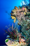 Bright, Colorful Tropical Coral Reef Stock Images