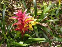 BRIGHT COLORFUL TROPICAL FLOWERS Stock Image