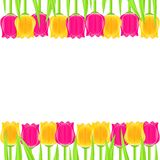 Bright Colorful Tulip Frame Royalty Free Stock Images
