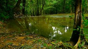 Bright colorfull natural pool in exotic rainforest. Tropical jungle landscape. A bright colorfull natural pool in the exotic rainforest. Tropical jungle stock video footage