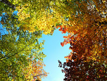 Bright autumn forest Stock Photography