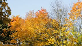 Bright colors of autumn stock video footage