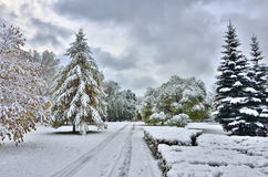 Bright colors of autumn park covers the first snow Stock Image